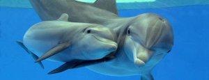 atl-bottlenose-dolphin-main