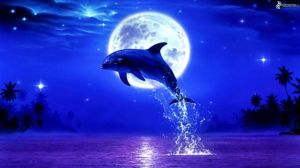 leaping-dolphin,-moon,-full-moon-190705