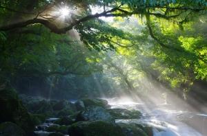 treesandstream